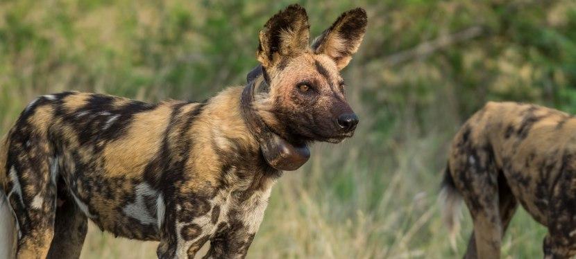 Kruger Lux Safari