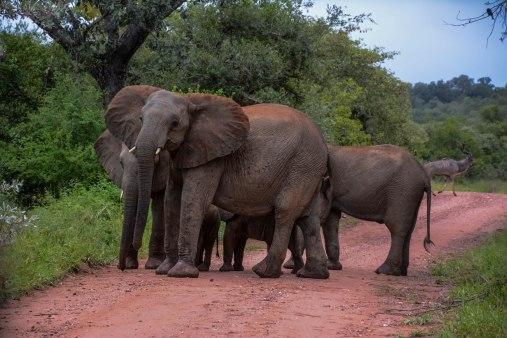 Elephant 03.jpg