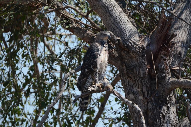 Birding in Kruger Park with Nature Travel Birding